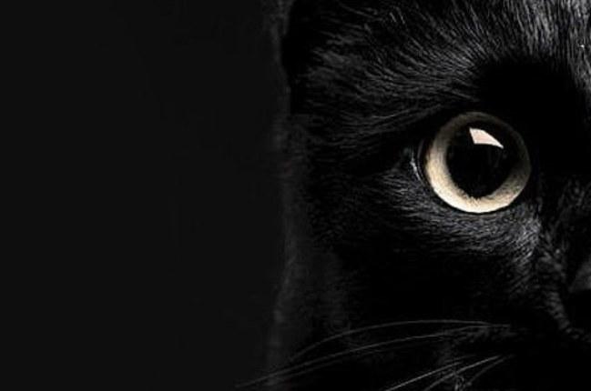 5981915-black-cat-wallpaper